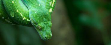 Daten interaktiv visualisieren mit Python und Plotly